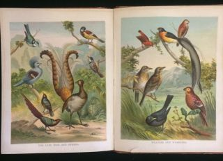 PICTURES AND STORIES FROM NATURAL HISTORY (children's animal book)