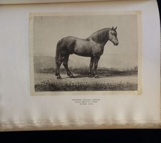 THE PERCEHERON HORSE. Charles. Walters Du Hays, T., illiam, introduction